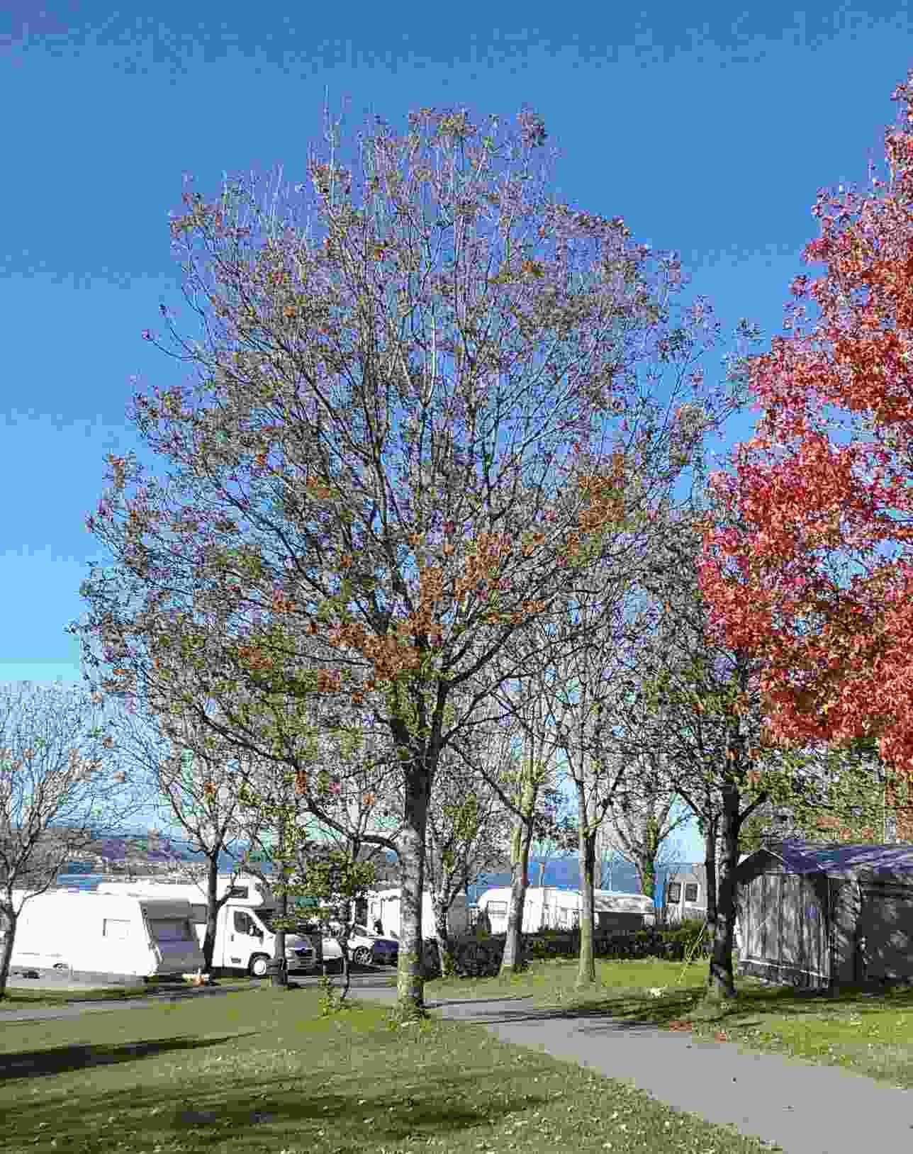 Gran Camping Zarautz 2ª en Zarautz